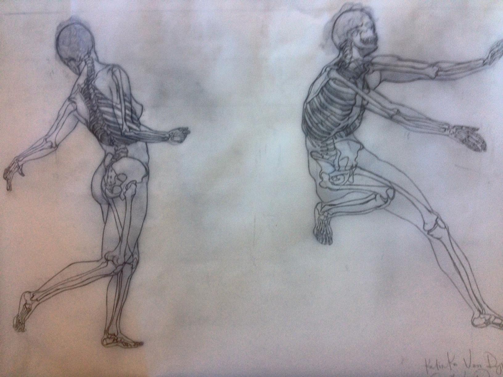 Figure Drawing Anatomy | art.ucsc.edu | Art Department, UC Santa Cruz