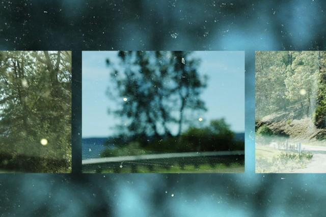 Norman Locks: Pollen on Windshield, California Rural Road at Lake Barryessa