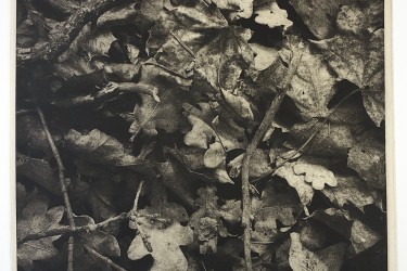 "Enrique Leal: ""Phasmid I"". Photogravure. 2016"