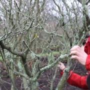 Video still from The Lichen Museum