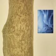 "Enrique Leal: ""Entomography Series 5"". Digital print. 2005"