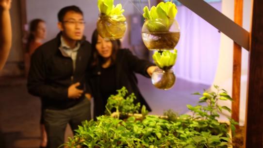 Image Bio Sensing Garden