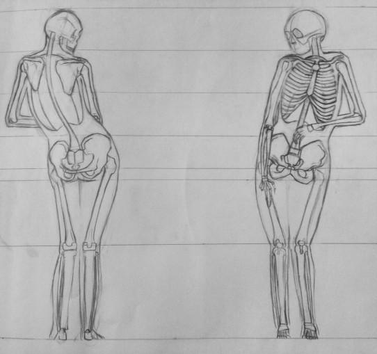 Image Anatomy Drawing Fall 2016